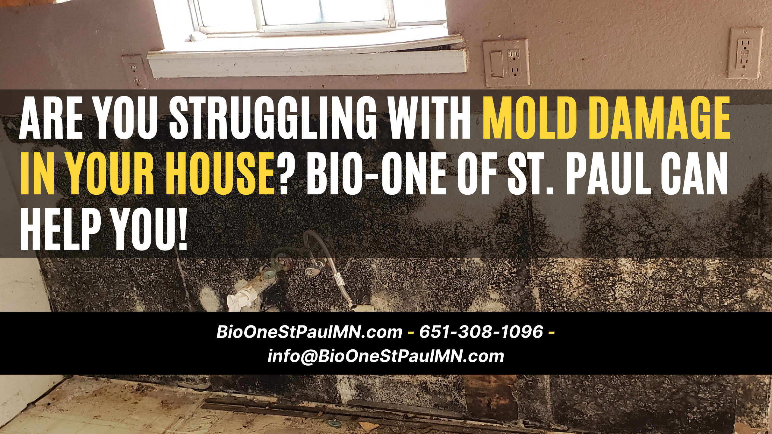 Are you struggling with mold damage in your house? Bio-One of St. Paul can help you!